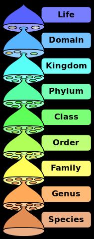 taxonomy plant