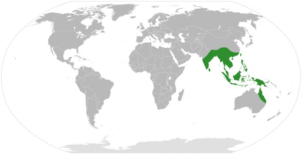 map alocasia world native